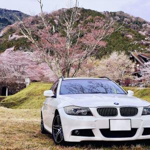 再会は桜の下で。
