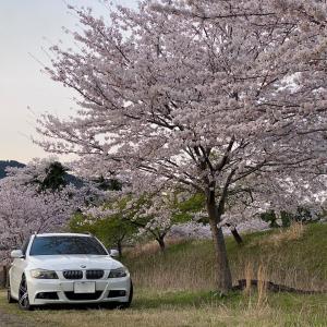 桜は満開なのに。