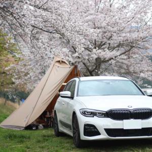 お花見ソロキャンプ。