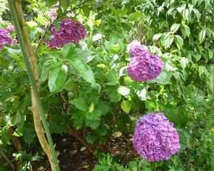 雨の時期 咲いた花々