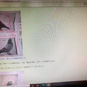 日本観賞鳩会を名乗るブログの画像盗用について