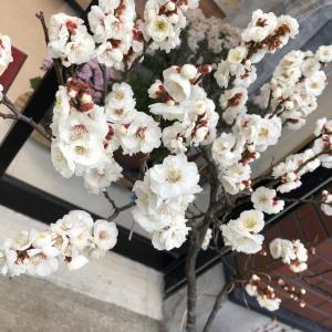 お店のお花