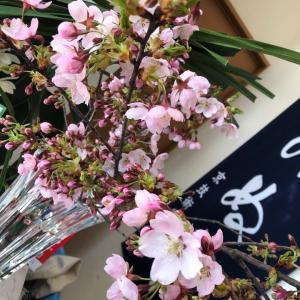お店のお花、桜