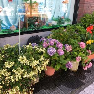 お店のお花、紫陽花も終わりに