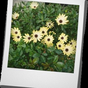 バラ以外のお花