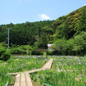 小国神社の花菖蒲園♪