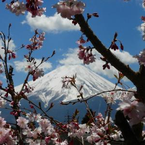 今日の富士山(庭先)