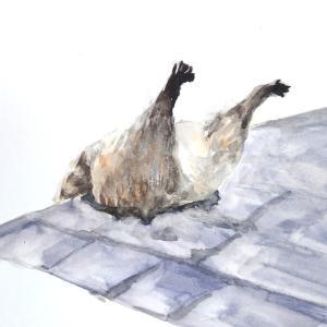 屋根に刺さったアライグマの練習