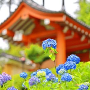 梅雨の日に〜三室戸寺☆