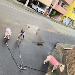 自粛犬ハナちゃん ,、ァ(*´Д`*)''ァ,、ァ