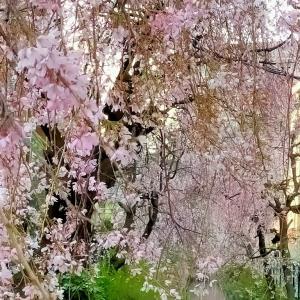 春というより初夏