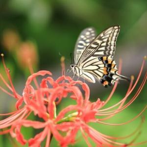 胡蝶の夢~夢から醒めた夢