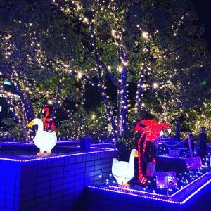 クリスマスソング ~ ルターの森 星が輝く夜 新百合ヶ丘