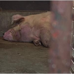 あなたがいることで ~ 動物園という名の牢獄 Change.org