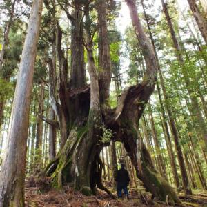 高知県スーパー巨木列伝(幹周10m以上)