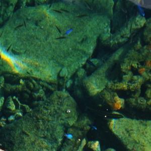 「南海の宝石」水床湾(1)岸壁下の熱帯魚群