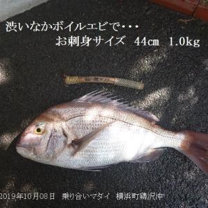 イソメにお刺身サイズ、エビで比較的大型か?