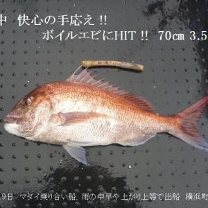 昨日のリベンジ、大漁で鬱憤晴らす (^Q^)/゛