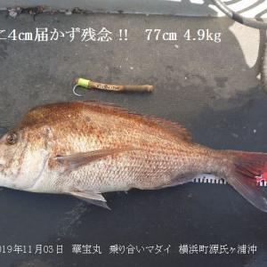 横浜町沖終盤マダイ絶好調 \(^O^)/