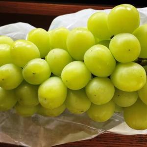 夏が終わりますね。ブドウ狩りに梨 所沢で観光農園はいかが?