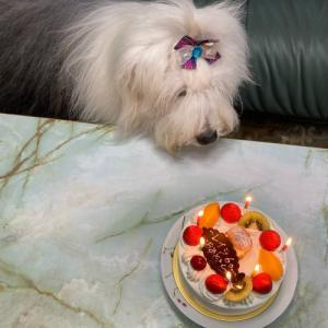 レイラ6歳おめでとう~♪