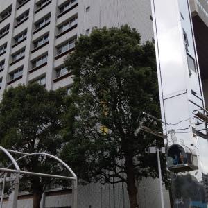 官これ84~船橋市役所~
