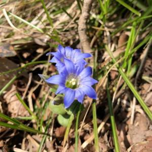 春の花いっぱいの国上山から弥彦山へ