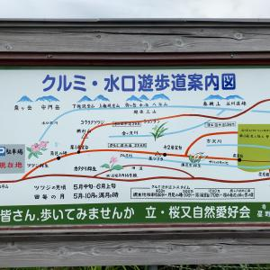 大平山・月見の峰とクルミ・水口遊歩道(魚沼市)