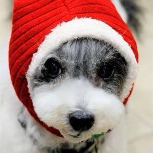サンタ帽。
