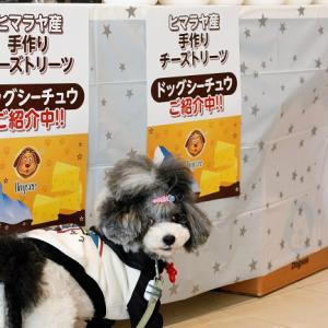 ヒマラヤチーズ試食会開催中!