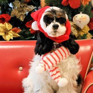 クリスマスまであと2週間。