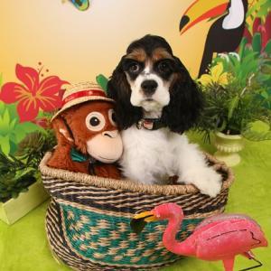 明日も愛犬撮影会が開催されます