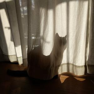 ゆうちゃんの影とタオちゃん♪