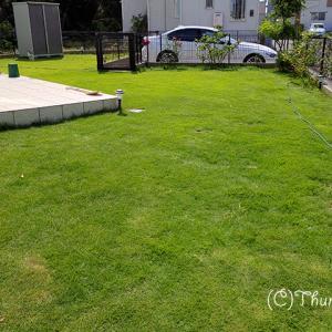 久しぶりに芝刈りしました(ガーデニング)