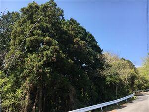【移動結果】4/3静岡県島田市檜峠