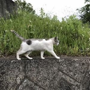 マリの猫友
