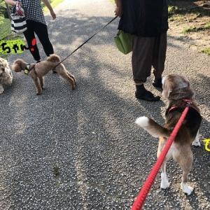 小型犬会議 ~犬密~
