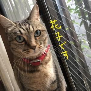 猫もリモートワーク
