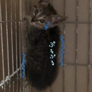 子猫のじゅんじゅん里親さん決まりました!