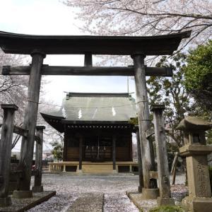 ★八王子の桜★【梅坪町の天神神社を訪れる】
