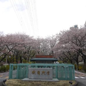 ★八王子の桜★【創価大学を訪れる】◆八王子八十八景◆