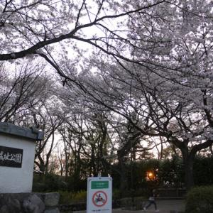 ★八王子の桜★【平山城址公園を訪れる】