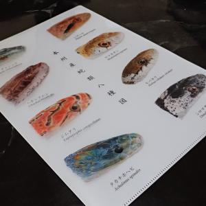 本州産蛇類八種図