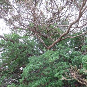 気になる樹【生命力】