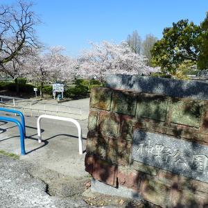 桜見ウォーキング
