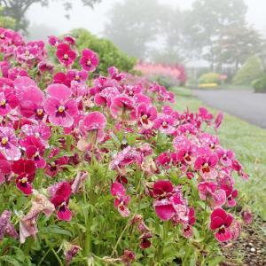 雨上がりの花公園から