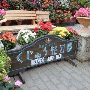 秋のくじゅう花公園【物量作戦】