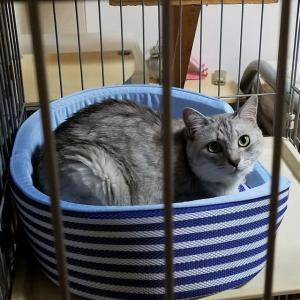 おnewの猫ベッド☆