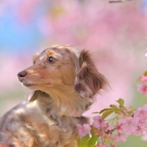 小田原に梅を見に行ってきた