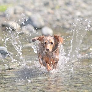 お初の場所での川遊び